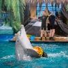 Дельфинарии, океанариумы в Каменоломнях