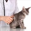 Ветеринарные клиники в Каменоломнях